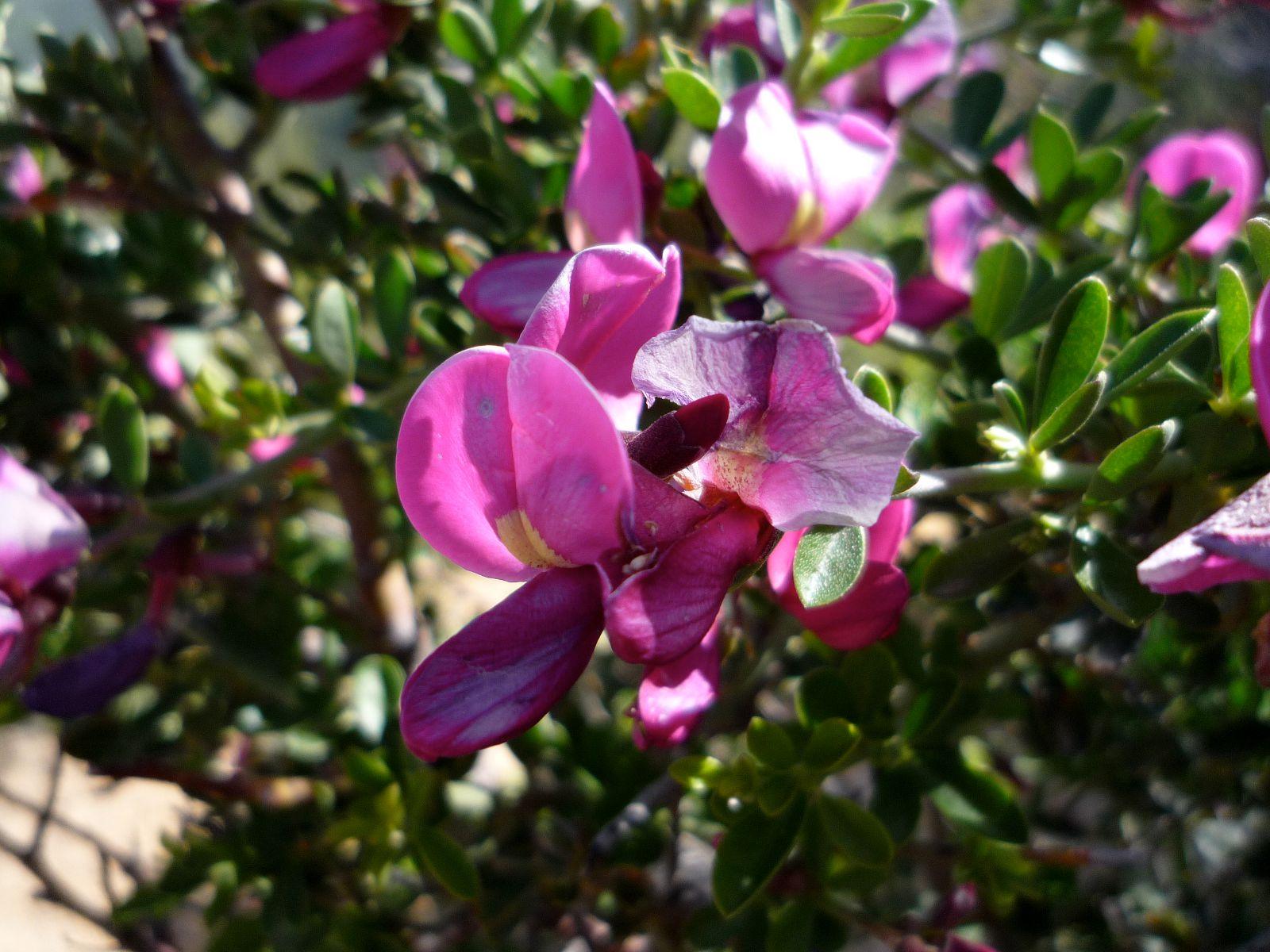Name of montana flower myideasbedroom com