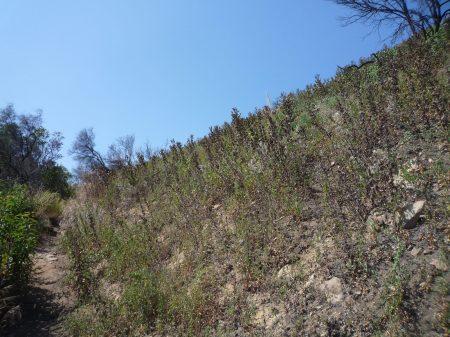 Dead Hillside