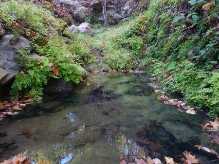Adiantum capillus-veneris grotto