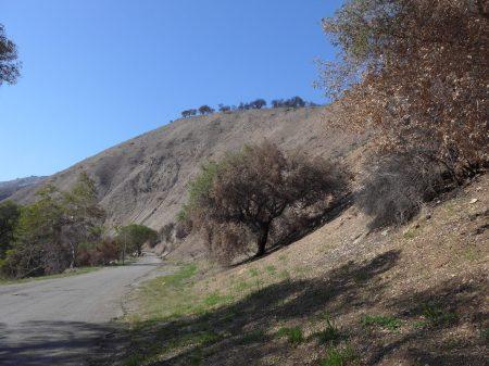 White-Hillside