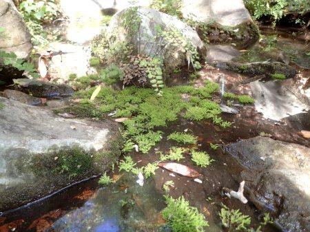 A pool of moss